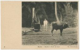 Mahé 6 Moulin A Huile De Coco Coconut Mill Cliché Erdula - Seychelles