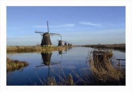 Windmills Of Pays Bas Postcard - Molinos De Viento