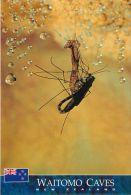 Emerging Glowworm Fly, Waitomo Caves, New Zealand Postcard - Nuova Zelanda
