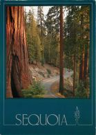 Sequoia NP, California, United States USA US Postcard Used Posted To UK 2000 Stamp - Etats-Unis