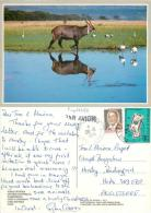 Defassa Waterbuck, Ivory Coast Cote D'Ivoire  Postcard Used Posted To UK 1991 Stamp - Ivory Coast