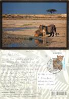 Lions At Etosha Pan, Namibia Postcard Used Posted To UK 2006 Nice Stamp - Namibia