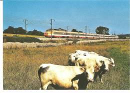 TGV PSE Sur La LGV Paris-Lyon, Près De Liernais (21) - Trains
