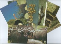 ANIMAUX (animal Faune) NESTLE Merveilles Du Monde LOT De  18 FICHES  Illustrées -(Images) - Animals