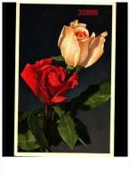 Fleurs 45 Cp - Cartes Postales