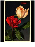 Fleurs 45 Cp - Postales