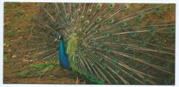 ANIMAUX  NESTLE Merveilles Du Monde FICHE  Illustrée Le Paon Bleu (de Blauwe Pauw)(animal Faune Oiseau) - Animals