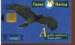 FAUNA IBERICA AQUILA CULEBRERA - Aquile & Rapaci Diurni