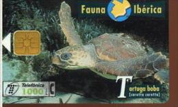 FAUNA IBERICA TARTUGA BOBA (CARETTA CARETTA) - Aquile & Rapaci Diurni