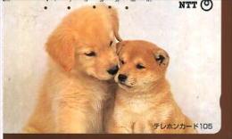 NTT CANI - Cani