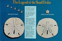 Legend Of The Sand Dollar, USA Postcard Used Posted To UK 1982 Stamp - Poissons Et Crustacés