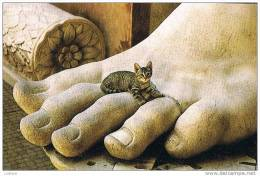 Roma - Chat Chaton - Cat In The Constantin Statue - Italia ( 3 Scans) - Chats