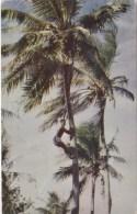 Native Gathering Coconuts, Samoa - Forsgren Studio C6148S, Posted 1967 - Samoa