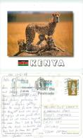 Cheetah Family, Kenya Postcard 2008 Stamp - Kenya