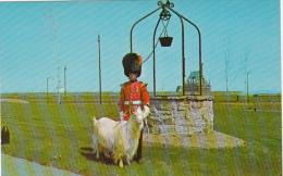 Québec Citadel Citadelle - Royal 22 Regiment Military - Mascot Goat Batisse Baptist - Unused - VG Condition - Québec - La Citadelle