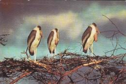 SWAZILAND, Marabouts, Oiseaux,  Publicité Marinol, Labo La Biomarine - Swaziland