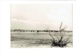 En Camargue - Paysage - Vaches - N°1301 - Edit. A. LALLEMAND - - Vaches