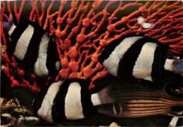POISSONS EXOTIQUES - Vissen & Schaaldieren