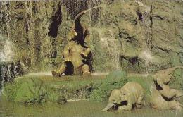 Florida Orlando Elephant Bathing Pool Walt Disney World