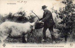 -24- Groupe Sympathique Cherchant La Truffe (1909) - France