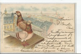 PIGEONS   VOYAGEURS     DESSIN   SUR LES TOITS A ANVERS  BELGIQUE TIRAGE 1900 - Birds