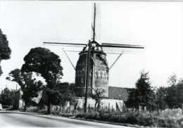 GRONSVELD - Eijsden/Margraten (Limburg) - Molen/moulin - De Stenen Torenmolen Uit 1623. Echte Fotokaart Uit 1978 - Margraten