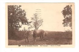 CPA : 87 - Le Limousin Illustré : Nos Campagnes - Retour à La Ferme : Jeune Garçon Avec Un Taureau + Campagne - Agriculture