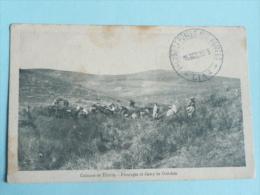 Campagne D'Orient, 1918, Colonne De TILSITIN, Paturages Et Camp De Oul- ADA - Guerres - Autres