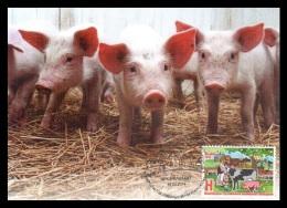 Maxicard Belarus 2014 Mih. 1005 Year Of Family Farm. Piglets - Belarus