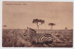 Ansichtskarte Aus Somalia Italiana Mit Zebras (w149) - Somalia