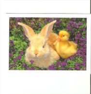 CALENDRIER Petit Format  1998 - Small : 2001-...