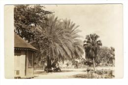 TRINIDAD  ( Antilles )  ?  /  CASE  ET  PALMIERS  / CARTE-PHOTO , Tirage Argentique - Trinidad