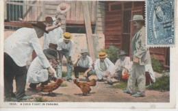 COMBAT DE COQ . Carte Rare - Panama