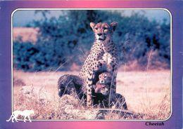 Cheetah And Baby, Kenya Postcard Used Posted To UK 2000s Stamp - Kenya