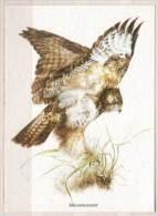 Mäusebussard - Vogels