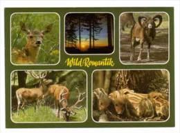 Wild - Und Freizeitpark Schulte - Wrede , Mehrbildkarte - Dieren