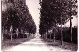 RAMUSCELLO UDINE VIALE VILLAFRESCHI PICCOLOMINI   F/G LUCIDA  VIAGGIATA  ANNI '50 - Andere Städte