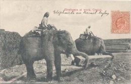 Ceylon, Elephants At Work, Ceylon   (Sri Lanka)  (Ceylan) - Sri Lanka (Ceylon)