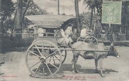Ceylon, Bullock Hackery, Ceylon   (Sri Lanka)  (Ceylan) - Sri Lanka (Ceylon)