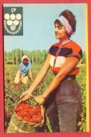 K891 / 1965 - BULGARPLODEXPORT - Beautiful Woman With A Basket With Peppers - Calendar Calendrier Kalender - Bulgaria - Petit Format : 1961-70