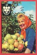 K892 / 1965 - BULGARPLODEXPORT - Beautiful Woman With A Basket Of Apples - Calendar Calendrier Kalender - Bulgaria - Calendriers