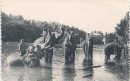 Ceylon, Le Bain Matinal ( Elephants)   (Sri Lanka) (Ceylan) - Sri Lanka (Ceylon)