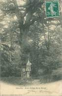 92 - CHAVILLE - Gros Chêne De La Vierge - Chaville