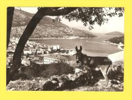 Postcard - Donkey, Vela Luka         (V 21953) - Asino
