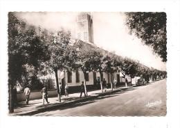 El Arrouch-La Mairie- Voiture (A.837) - Algeri