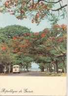 P3688 Avenue Bordee De Flamboyante Bus  Guinea  Front/back Image - Guinea Bissau