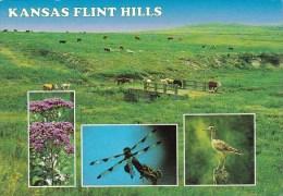 Kansas Flint Hills Wickhita Kansas
