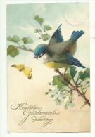 C. Klein * Catharina Klein * Meissner & Buch * Kunstkarte Nr. 3063 * 1929 * Blaumeise Und Schmetterling - Klein, Catharina