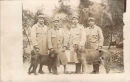 WW1 - Juin 1915, 4 Arlésiens, Chiens, Carte Photo - Guerre 1914-18