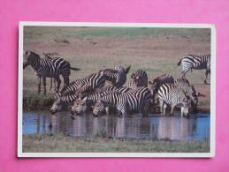 TANZANIE - Zèbres - Tanzania
